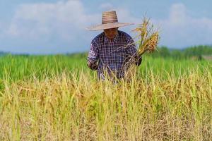 fazendeiro asiático trabalhando em um campo de arroz sob o céu azul foto