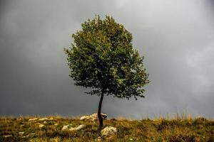 árvore e nuvens foto