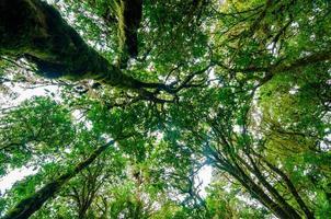 floresta tropical doi inthanon nuvem floresta chiang mai tailândia foto
