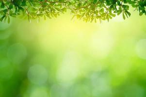 folha fundo bokeh desfoque fundo verde foto