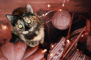 o gato fica nas patas traseiras em um fundo de madeira. foto