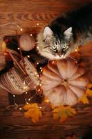 gato, abóbora, folhas de outono e um lenço de malha em um fundo de madeira. foto