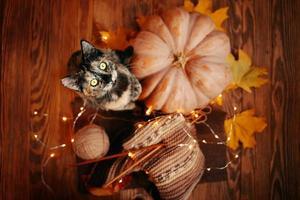 vista superior de um gatinho fofo, uma abóbora laranja, folhas e um lenço. foto