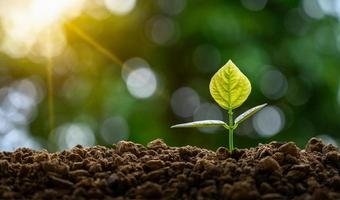 desenvolvimento de crescimento de mudas plantio de mudas planta jovem na luz da manhã no fundo da natureza foto