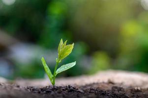plantar mudas planta jovem na luz da manhã no fundo da natureza foto