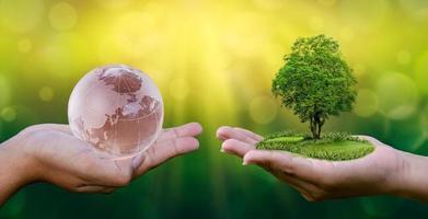 conceito save the world save environment o mundo está nas mãos do fundo bokeh verde nas mãos de árvores que crescem mudas. bokeh fundo verde feminino mão segurando uma árvore no campo natureza grama foto
