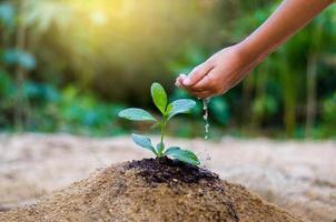 mão dar água árvore nas mãos de árvores que crescem mudas. bokeh fundo verde feminino mão segurando uma árvore no campo natureza grama foto