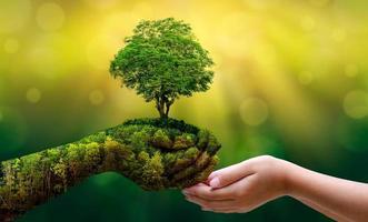 meio ambiente dia da terra nas mãos de mudas de cultivo de árvores. bokeh fundo verde feminino mão segurando uma árvore no campo natureza grama foto