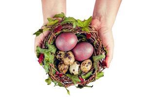 Ovos de Páscoa com decoration.quail Eggs em um ninho de pássaro segurados por mãos de mulher. foto