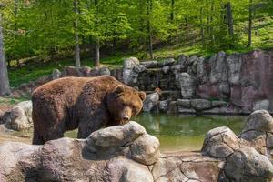 urso no zoológico foto