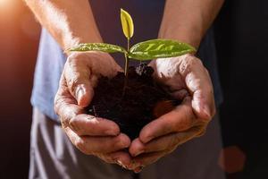 mão de fazendeiro segurando mudas em fundo preto foto