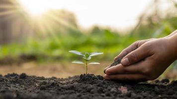 plantio de árvores e plantio de árvores, incluindo o plantio de árvores pelos fazendeiros manualmente, idéias de crescimento de plantas. foto
