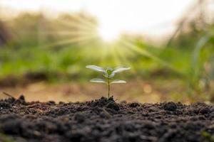 as árvores crescem naturalmente em solos de boa qualidade, conceito de plantio de árvores, restauração florestal sustentável e de qualidade. foto