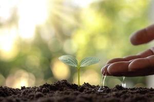 os agricultores estão regando pequenas plantas à mão com o conceito do Dia Mundial do Meio Ambiente. foto