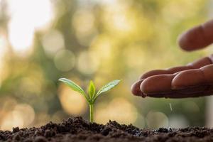 cultivo de plantas em solo fértil e rega. plantar ideias e investimentos para os agricultores. foto