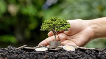 árvore crescendo em moedas e fundo verde natureza turva. foto