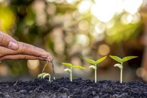 4 estágios de crescimento das árvores na natureza e bela luz da manhã, conceito de crescimento da planta e estabilidade natural. foto