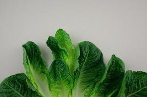 padrão de arranjo de vegetais de alface cos ou alface romana plana sobre fundo cinza foto