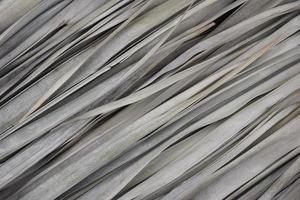 folhas de palmeira naturais secas com fundo abstrato do teste padrão da textura das cores bege cinza silenciado. natureza, orgânica, planta, eco amigável, verde, exibição de produtos ou cosméticos, conceito de pano de fundo. foto