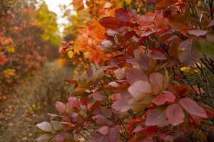 floresta de outono colorida foto