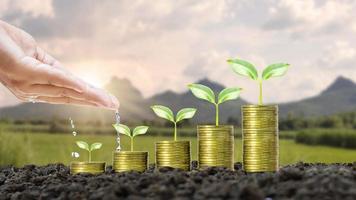 as mãos dos fazendeiros regam árvores em cima de moedas empilhadas em um fundo natural desfocado e luz natural com ideias de crescimento financeiro. foto