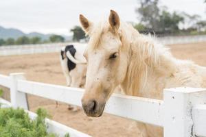 cavalos no campo foto