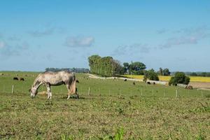 vista da fazenda e um cavalo foto