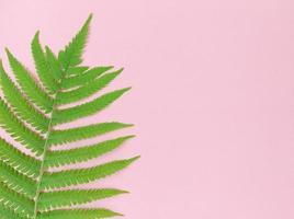 folha de samambaia verde sobre fundo rosa com espaço de cópia. foto