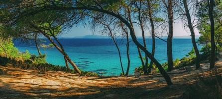 praia de portokali, vista da floresta de pinheiros, sithonia, península halkidiki, grécia. foto
