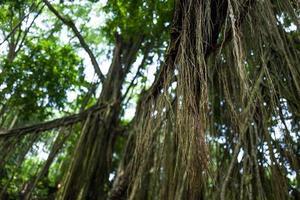 camisetas na floresta do macaco ubud foto