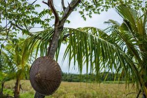 vista em campos de arroz em canggu em bali foto