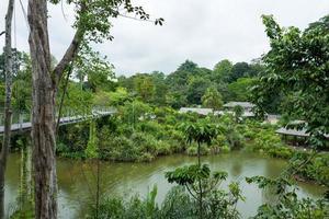 o jardim botânico em cingapura foto