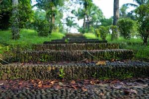 a natureza no templo borobudur é uma espécie de Yogyakarta foto