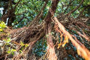 árvores no parque memorial da paz em taipei em taiwan foto