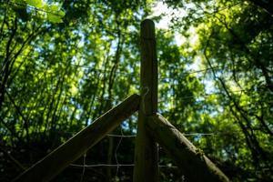 uma cerca ao amanhecer na floresta foto