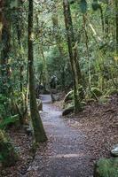 parque da ponte natural queensland austrália foto