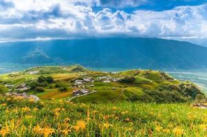 fazenda de flores de hemerocallis na montanha liushidan em hualien, taiwan foto