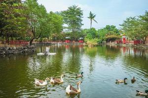 lago de carpas da fábrica de açúcar turística de nanzhou em pingtung, taiwan foto
