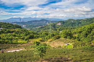cenário do jardim de chá maokong em taipei, taiwan foto