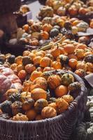 monte de mini abóboras decorativas e cabaças em cestas no mercado de fazendeiros, fundo de outono foto