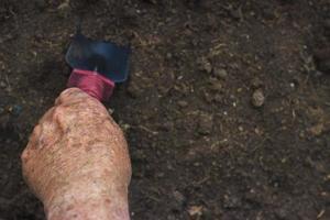 close-up de uma mão de um velho segurando uma espátula, conceito de jardinagem foto