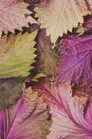 folhas de outono - fundo de outono foto