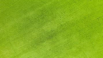 vista aérea superior do campo de arroz verde vista de cima foto