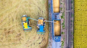 vista aérea superior da colheitadeira e caminhão trabalhando no campo de arroz, vista de cima foto