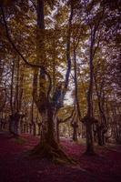 árvores na floresta na temporada de outono foto