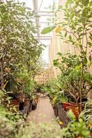 caminho em um jardim de primavera entre árvores e plantas em vasos. Primavera. foto