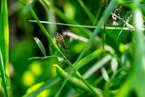o inseto macro foto