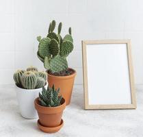 cactos e plantas suculentas em vasos sobre a mesa foto