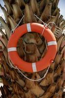bóia salva-vidas pendurada em uma palmeira foto