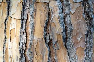 textura de madeira marrom tronco de árvore foto